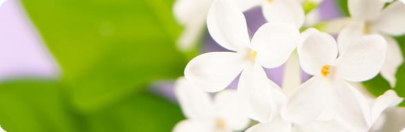 white lilac border_round